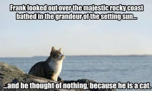 frank-the-philosophy-cat-60405